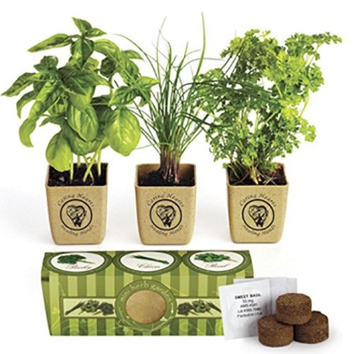 Seeds & Grow Kits